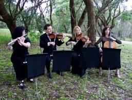 Velvet Strings